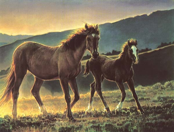 Nancy Glazier Star and her Foal