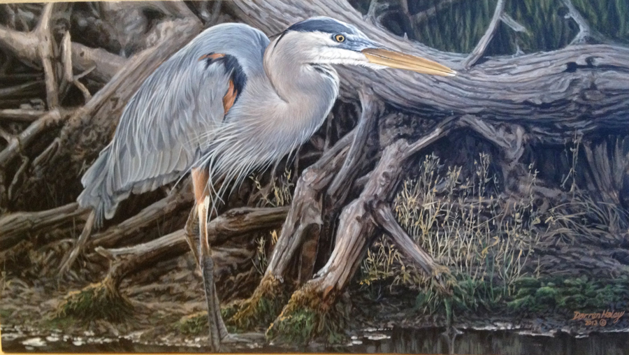 Darren Haley Blue Heron