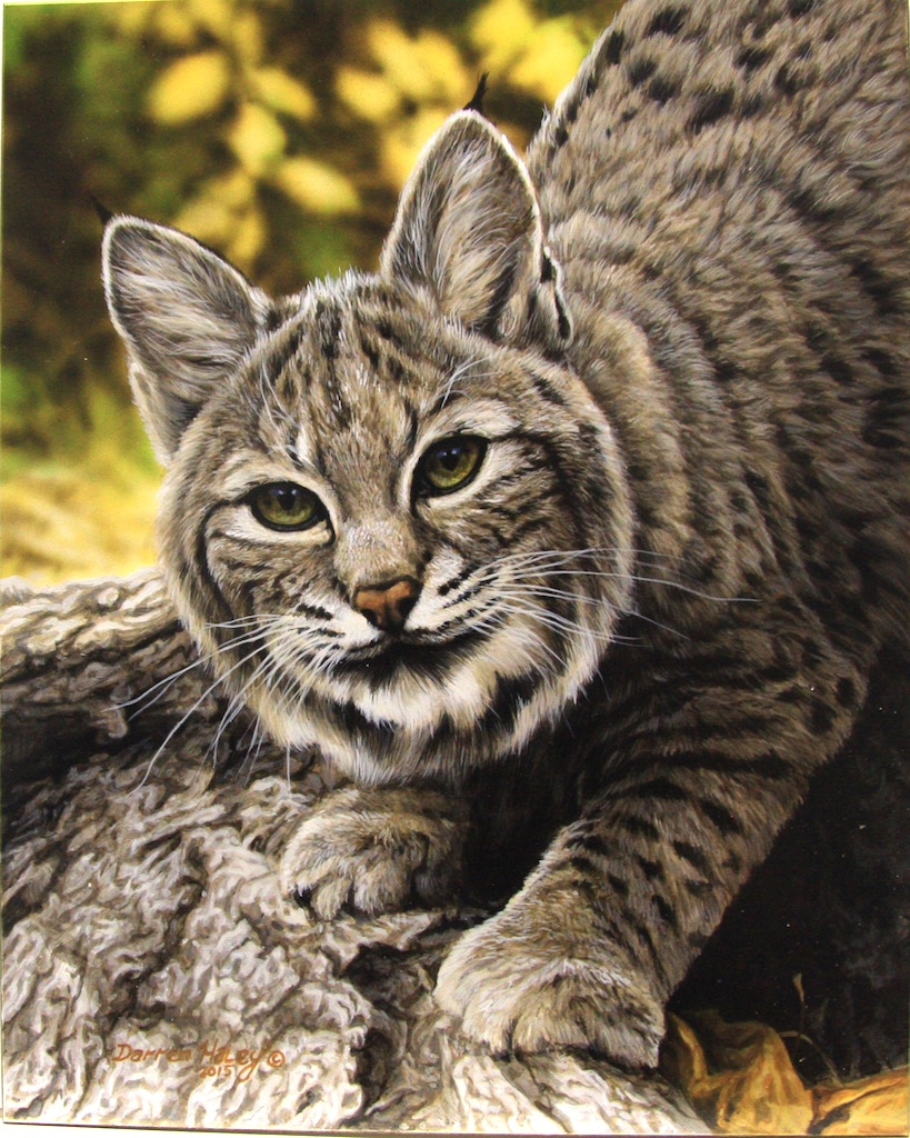 Darren Haley Bobcat