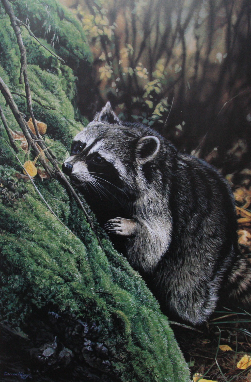 Darren Haley Fall Scents Raccoon