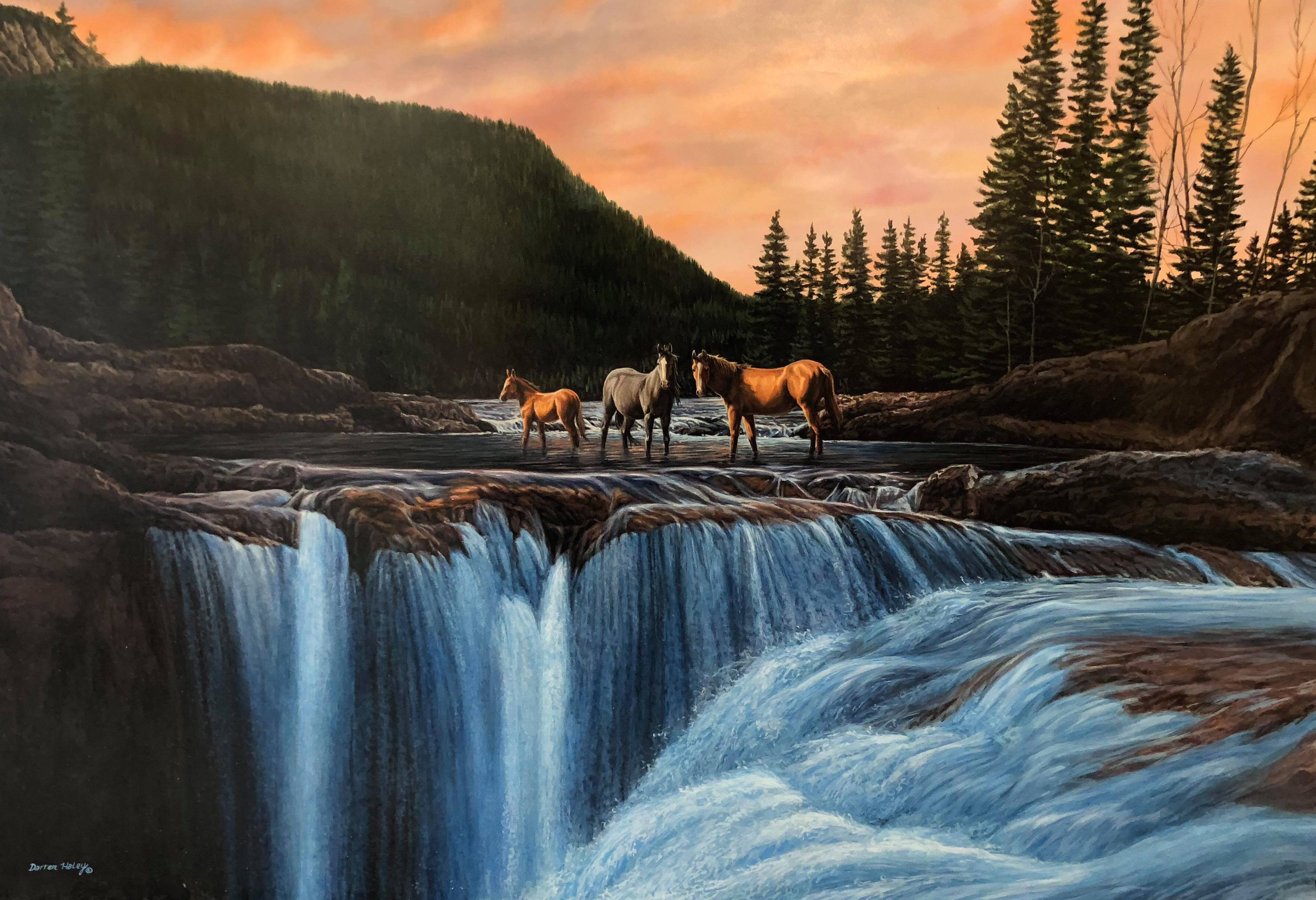horses and elbow falls darren haley