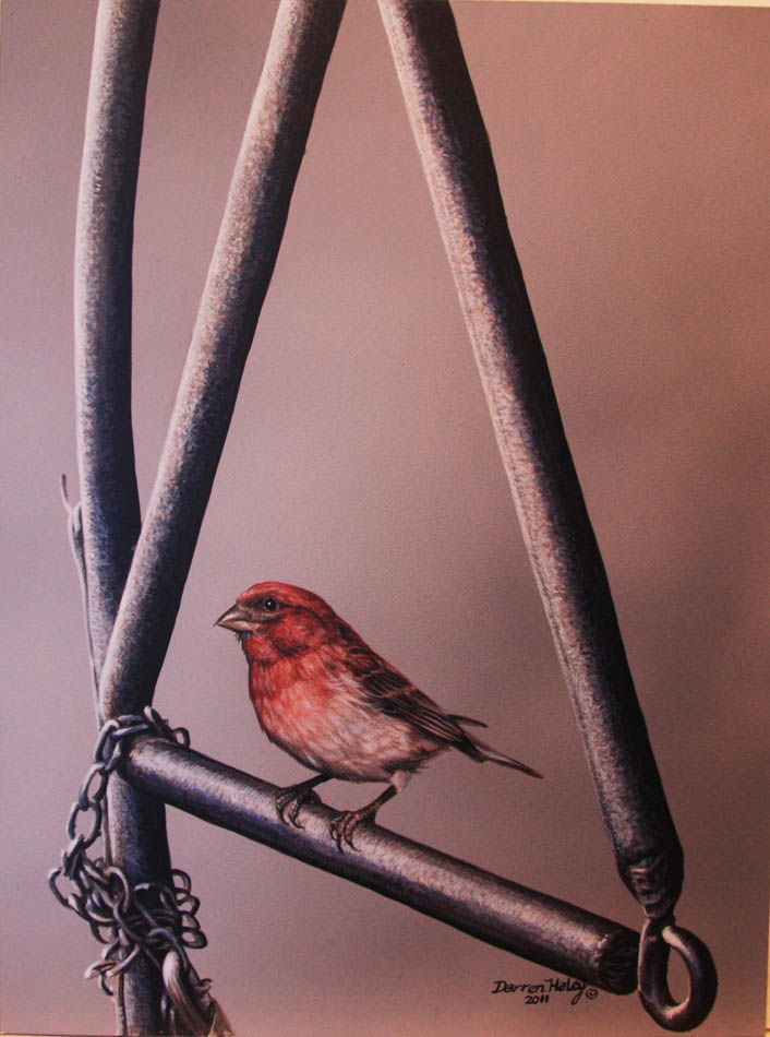 Darren Haley House Finch