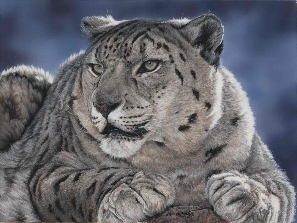 Darren Haley Snow Leopard