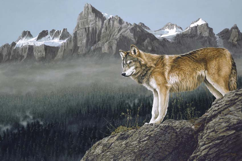 Darren Haley High Country Wolf