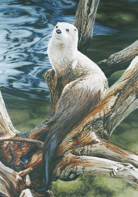 Darren Haley Jungle Jim River Otter