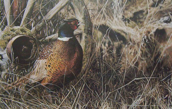 Darren Haley New Homesteader Ducks Unlimited Print
