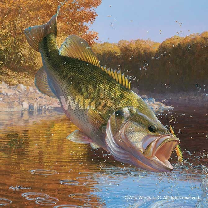 Mark Susinno Cartwheeling Largemouth Bass