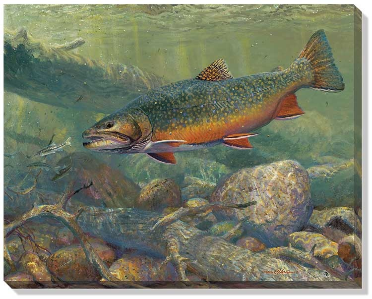 Mark Susinno Brook Trout - Hunting The Hunters