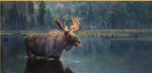 Brent Townsend - Algonquin Bull Moose