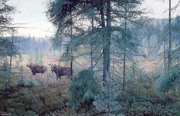 Brent Townsend Early Morning Rain Moose