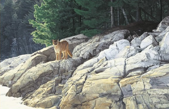 Brent Townsend - Lake Edge Cougar