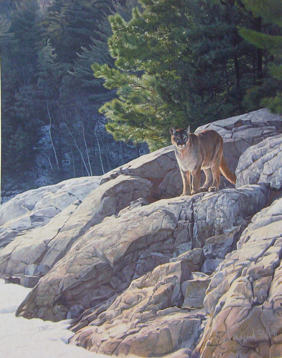 Brent Townsend - Lake's Edge Cougar