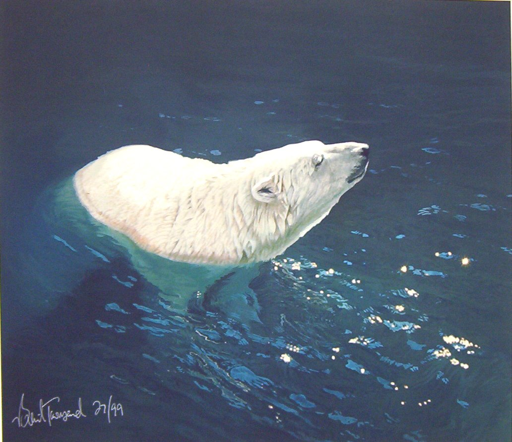 Brent Townsend - Polar Bear