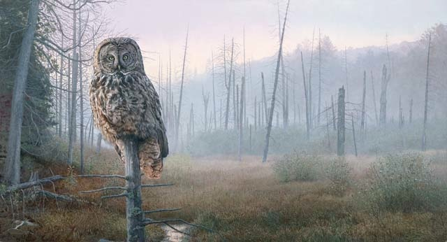 Brent Townsend Silent Hunter Great Gray Owl